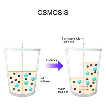Ósmosis. filtro de agua. Diagrama vectorial con explicación