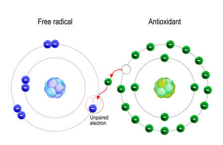 Free radical and Antioxidant. structure of the atom. Antioxidant donates electron to Free radical  イラスト・ベクター素材