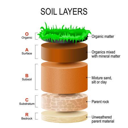 matter: soil layers. Soil Formation and Soil Horizons. Soil is a mixture of plant residue and fine mineral particles, which form layers. Vector diagram Illustration