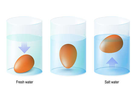huevo de prueba Huevo flotante. Experimentos científicos (los huevos cayeron en agua dulce y salada para mostrar las propiedades de la densidad.) Y prueba los huevos para conservar la frescura (el huevo fresco se hundirá pero el podrido flotará). Ilustración de vector