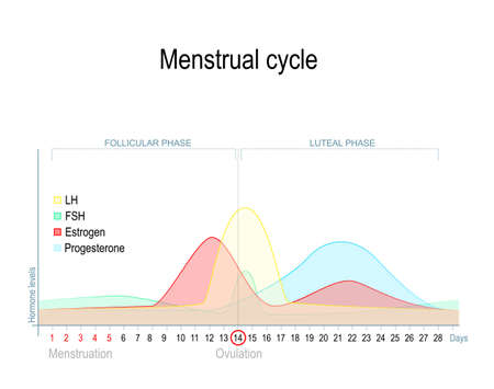 Menstrual cycle and hormone level. Ovarian cycle: follicular and luteal phase