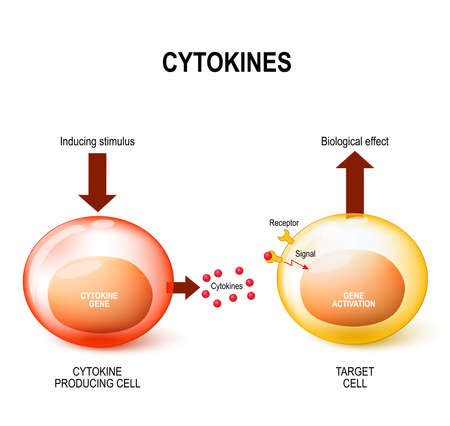 Cytokines are released by cells and affect the behavior of other cells. Vector concept Иллюстрация