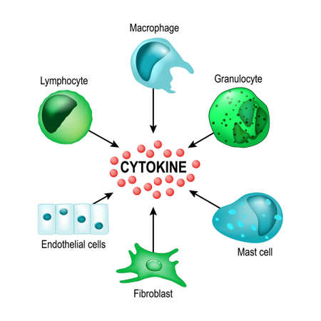 Cytokines are produced by macrophages, lymphocytes, mast cells, endothelial cells and fibroblasts. Cytokines include chemokines, interferons, interleukins, lymphokines, and tumour necrosis factors, but not hormones or growth factors