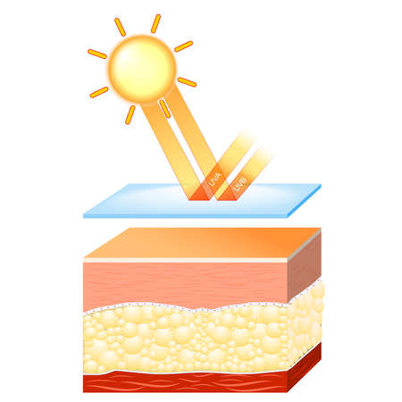 uv protection for sensitive skin. The sunscreen lotion protected the skin from harmful radiation (UVA and UVB rays)