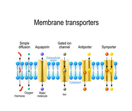 Mechanisms for the transport of ions and molecules across cell membranes. Types of a channel in the cell membrane: simple diffusion, Aquaporin, Gated ion channel, Symporter and Antiporter