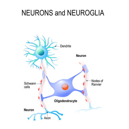 Neurons and neurological icon. Illustration
