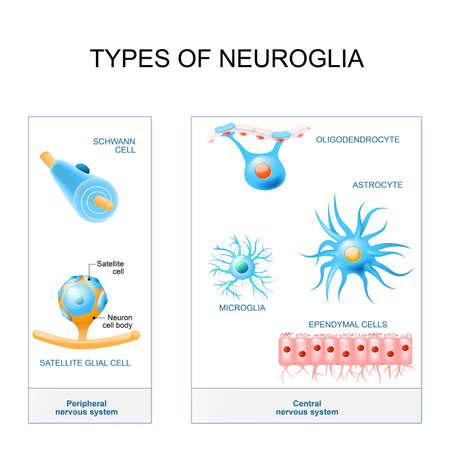 Types of neuroglia illustration.