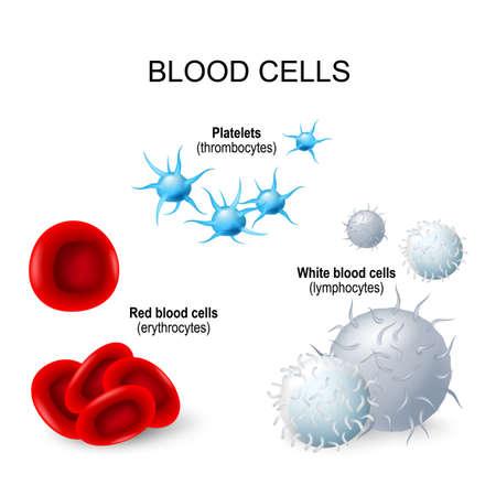 Bloedcellen illustratie.