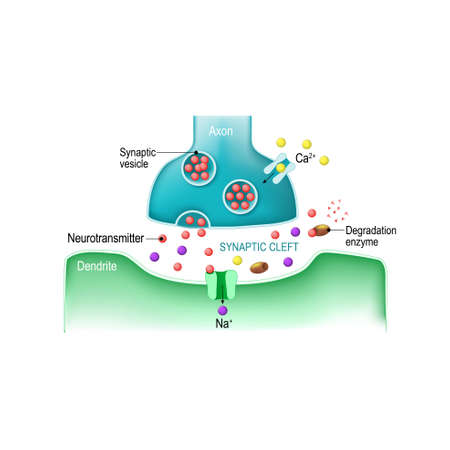 synaptic: Signal at a receiver of the body illustration. Illustration