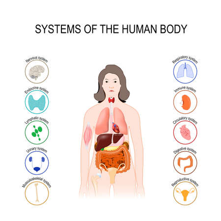 Systems of the human body set. Medical poster with internal organs on white background. Silhouette of a woman illustration. Vectores