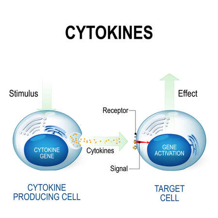 Cytokines proteins that are important in cell signaling. They are released by cells and affect the behavior of other cells. Cytokines include interferons, interleukins, lymphokines and other. Cytokines are produced by a broad range of cells, including immune cells: macrophages, B lymphocytes, T lymphocytes and mast cells.