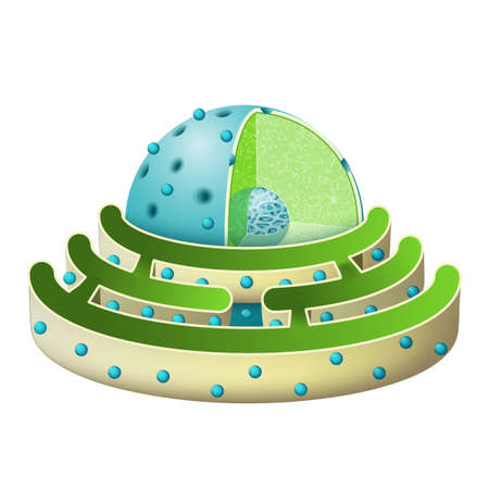 Structure of Nucleus and Rough endoplasmic reticulum. parts of the cell nucleus: nuclear envelope, nucleoplasm, nuclear matrix, chromatin and nucleolus. Endoplasmic reticulum is a continuous membrane, which is present in plant cells, and animal cells. Stock Illustratie