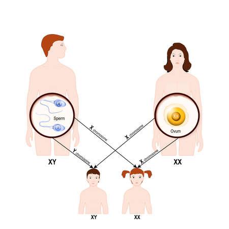 genetisches Vererbungskonzept. Mann und Frau mit Kindern Vector Illustration.