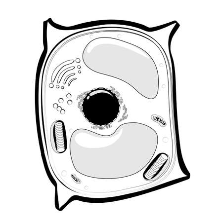 Plant cell structure. black and white  line icon Vector illustration.