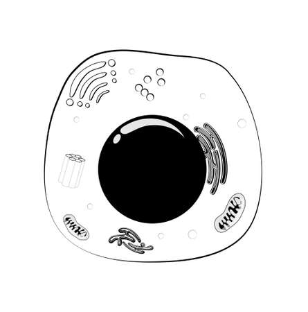 Animal cell structure in Black and White illustration.