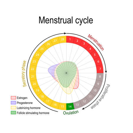 Menstrual cycle and hormone level. Ovarian cycle: follicular and luteal phase. Bleeding period and ovulation. Circular flow chart. Vector diagram Vettoriali