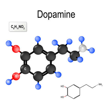Dopamine (DA, dihydroxyphenethylamine) is an organic chemical of the catecholamine and phenethylamine. neurotransmitter - chemical released by neurons to send signals to other nerve cells. Structural chemical formula and model of molecule of Dopamine Archivio Fotografico - 101081856