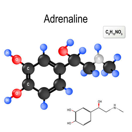 Adrenaline (epinephrine) is a hormone, neurotransmitter, and medication. Produced by the adrenal glands and neurons. plays an important role in the fight-or-flight response by increasing blood flow to muscles. Structural chemical formula and model of molecule of adrenaline.