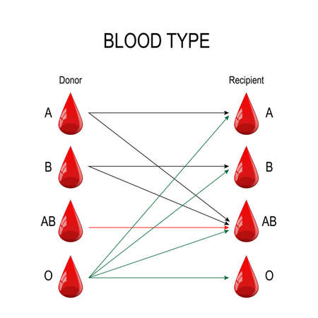 Recipient and Donor. Types of blood (A, B, AB, O). There is a specific compatibility between groups for donating and receiving blood. Only a certain type of blood group can be received or donated by someone. Vector diagram for medical, educational, and science use Ilustração