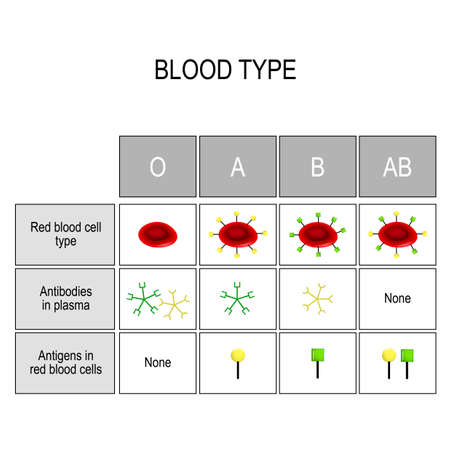 Blood groups Chart. There are four basic blood types, made up from combinations of the type A and type B antigens. Types of blood (A, B, AB, O). There is a specific compatibility between groups for donating and receiving blood. Only a certain type of blood group can be received or donated by someone. Vector diagram for medical, educational, and science use