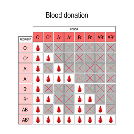 Blood Donation Chart. Recipient and Donor. Types of blood (A, B, AB, O). There is a specific compatibility between groups for donating and receiving blood. Only a certain type of blood group can be received or donated by someone. Vector diagram for medical, educational, and science use