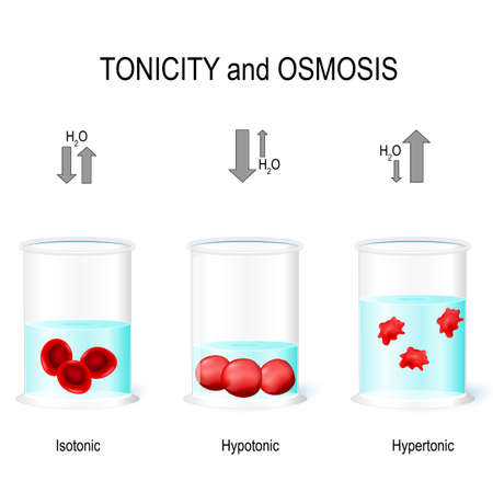 Isotonic, Hypotonic and Hypertonic solutions effects on animal cells. Tonicity and osmosis. This diagram shows the effects of hypertonic, hypotonic and istonic solutions to red blood cells. Vector illustration for biological, medical, science and educational use