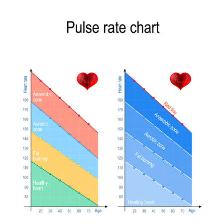 Pulse rate chart for healthy lifestyle. Maximum heart rate. Healthy heart, weight management, aerobic and anaerobic zone. maximum heart rate by age. Vector illustration for education, science and medical use