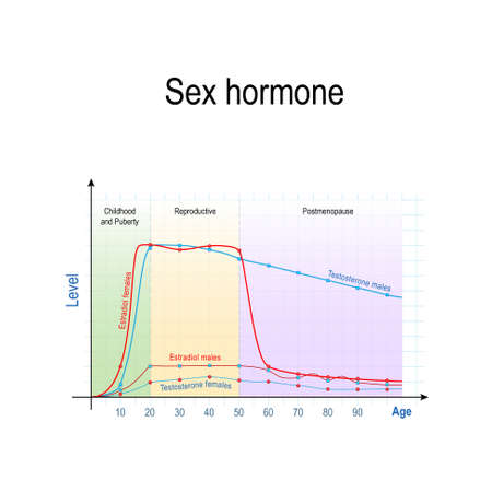 Sex hormones and ageing. Levels of Testosterone for males and females, and Estradiol for men and women. Chart of Sex hormone production in human.  Vector illustration for educational, biological, science and medical use