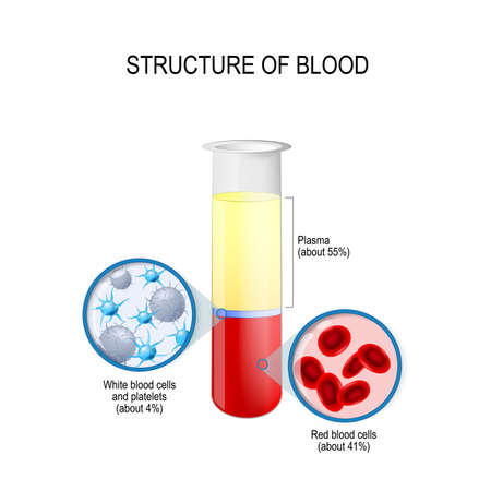 flask with blood components: red and white blood cells, plasma, and platelets. Composition of whole blood. Vector diagram for educational, biological, science and medical use Illustration