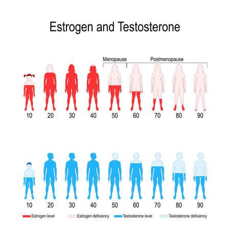 Poziomy hormonów estrogenu i testosteronu. wykres. schemat wektorowy do projektowania, użytku biologicznego, medycznego, edukacyjnego i naukowego.
