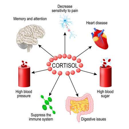 Cortisol hormone. functions in the body. It is hormone Released in response to stress and low blood-glucose concentration. Human endocrine system. vector diagram for medical, educational and scientific use.