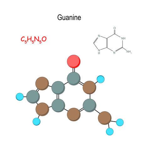 Guanine. Chemical structural formula and model of molecule. C5H5N5O. Vector diagram for educational, medical, biological, and scientific use Vektoros illusztráció