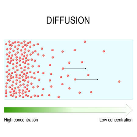 Diffusion is movement of molecules and atoms from a region of higher concentration to a region of lower concentration. Vector diagram for educational, medical, biological, and scientific use