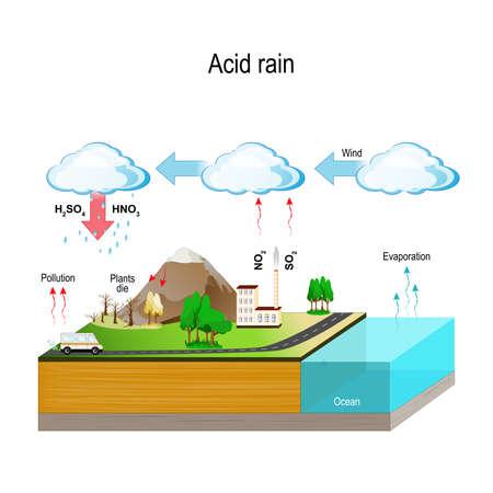 Le piogge acide sono causate dalle emissioni di anidride solforosa e ossido di azoto, che reagiscono con le molecole d'acqua nell'atmosfera per produrre acidi. Vettoriali
