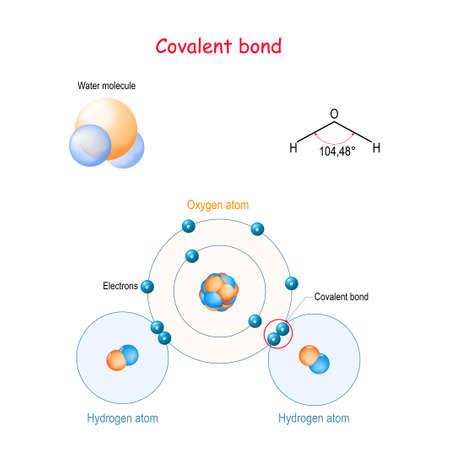 Covalente binding bijvoorbeeld watermolecuul (H2O). is een moleculaire (chemische) binding waarbij elektronenparen tussen atomen worden gedeeld. Structuurformule, ballen en stokkenmodel, waterstofbinding. Vectordiagram voor uw ontwerp, educatief, wetenschappelijk en medisch gebruik