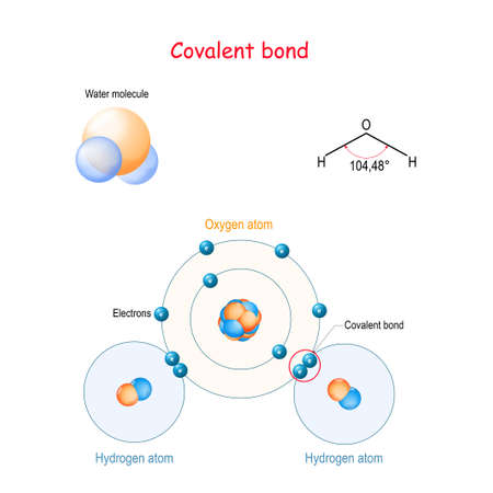 Enlace covalente, por ejemplo, molécula de agua (H2O). es un enlace molecular (químico) que implica el intercambio de pares de electrones entre átomos. Fórmula estructural, modelo de bolas y palos, enlace de hidrógeno. Diagrama vectorial para su diseño, educación, ciencia y uso médico.