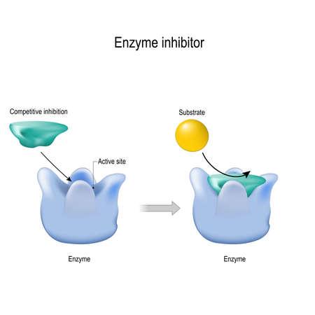 El inhibidor de enzimas es una molécula que se une (bloquea) a una enzima y disminuye su actividad. inhibición competitiva. diagrama vectorial para uso médico, educativo y científico.