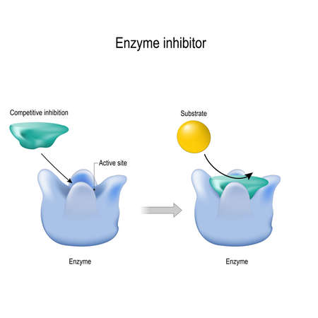 enzyme inhibitor is a molecule that binds (blocking) to an enzyme and decreases its activity. competitive inhibition. vector diagram for medical, educational and scientific use