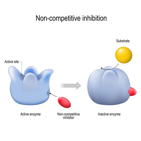 enzima. Inhibición no competitiva. El inhibidor es una molécula que bloquea una enzima y disminuye su actividad. diagrama vectorial para uso médico, educativo y científico. Ilustración de vector