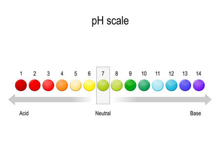 ph value scale. Acidic, neutral and alkaline pH of various liquids and solvents. Acid-base balance. infographic. Vector diagram for educational, medical, biological and science use Vectores
