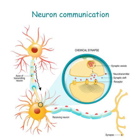 Komunikacja neuronowa. Przekazywanie sygnału nerwowego między dwoma neuronami z aksonem i synapsą. Zbliżenie synapsy chemicznej. schemat wektorowy do użytku w edukacji, medycynie, nauce