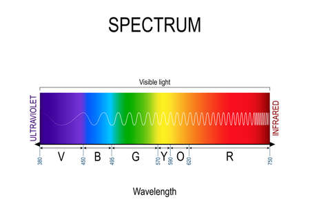 Visible spectrum color. infographic of sunlight color. In order of increasing frequency and decreasing wavelength. Range of spectrum from 350 to 750 nanometer. Vector illustration for educational, medical and science use.