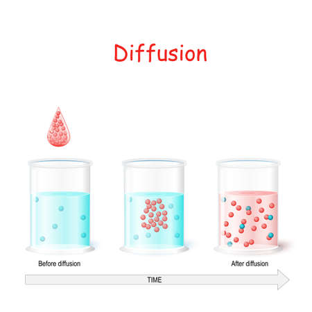 Diffusion - process in physics. Laboratory flasks with water before and after diffusion. Particles in a glass of water randomly move around, and eventually become distributed  uniformly. Vector illustration for educational and science use.