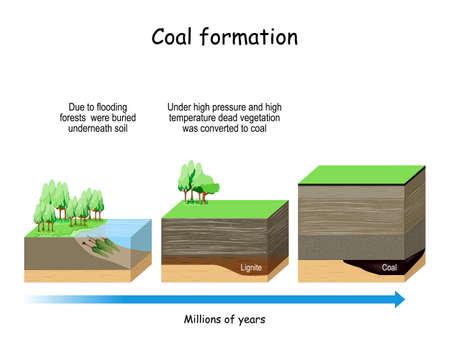 Formazione di carbone. combustibile fossile derivato da antiche piante fossili.