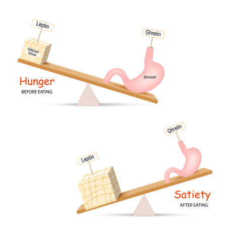 Ghrelin and Leptin. Human hormones before and after eating. Balance hormones that regulate Hunger and Satiety.  Иллюстрация