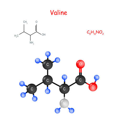 Valine is an essential amino acid. Chemical structural formula and model of molecule. C5H11NO2. Vector illustration for educational, medical, biological, and scientific use Illustration
