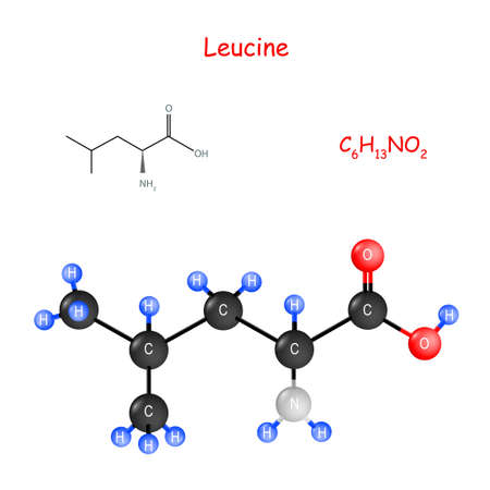 Leucine is an essential amino acid for biosynthesis of proteins. flavor enhancer. Chemical structural formula and model of molecule. C6H13NO2. Vector illustration for educational, medical, biological, and scientific use.