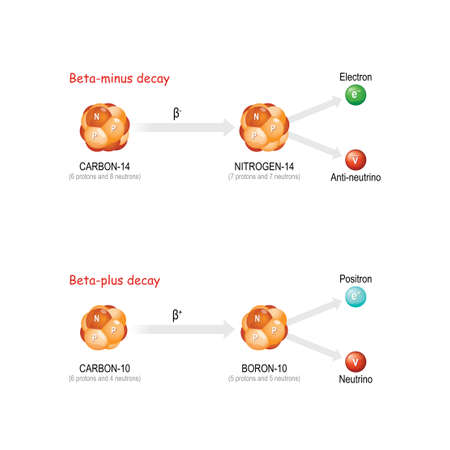 Beta-plus and Beta-minus decay. The substance Change the number of protons in the nucleus and forms a new stable element (the total number of protons and neutrons remains the same).