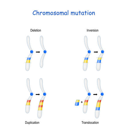 Chromosomal mutation: Inversion, Duplication, Translocation, Deletion. Иллюстрация