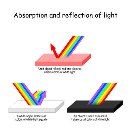Color light Absorption and reflection. A red object reflects red and absorbs others colors of visible light. A white - reflects waves all colors. black - absorbs all colors of visible light. Vector illustration